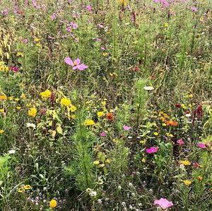 pole łąka kwiaty natura kosmetyki