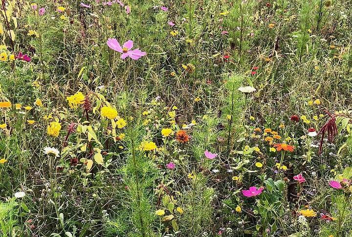 Rodzaje łąk kwietnych